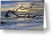 Treasures Of The Sea Greeting Card by Debra and Dave Vanderlaan