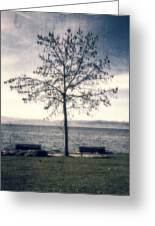 tree at lake Constance Greeting Card by Joana Kruse