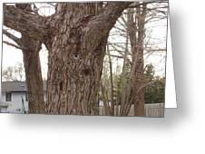 Tree Face Greeting Card by Lori  Theim-Busch