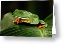 Tree Frog 1 Greeting Card by Bob Christopher