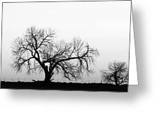 Tree Harmony Black And White Greeting Card by James BO  Insogna