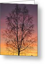 Tree In Sunset Greeting Card by Conny Sjostrom