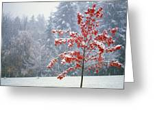 Tree In The Winter Greeting Card by Natural Selection Craig Tuttle