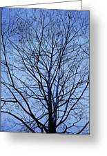 Tree In Winter Greeting Card by Andrew King