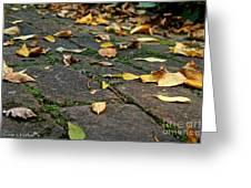 Tree Litter Greeting Card by Susan Herber