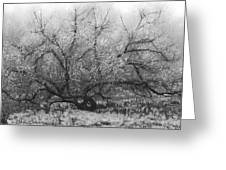 Tree of Enchantment Greeting Card by Debra and Dave Vanderlaan