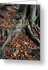 Tree Roots Of A Beech Tree Greeting Card by Adrian Bicker