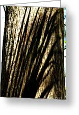Tree Shadows Greeting Card by Theresa Willingham
