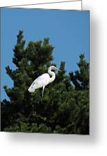 Treed Greeting Card by Chris Anderson