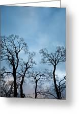 Trees. Autumn. Greeting Card by Konstantin Dikovsky
