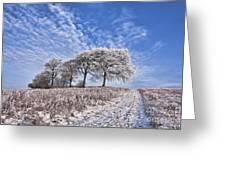 Trees In The Snow Greeting Card by John Farnan