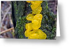 Tremella Mesenterica Greeting Card by Dr Keith Wheeler