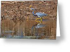 Tricolored Heron In The Winter Marsh Greeting Card by Louise Heusinkveld