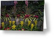 Tropical 1 Greeting Card by Wanda J King
