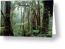 Tropical Cloud Forest Greeting Card by Gregory G. Dimijian