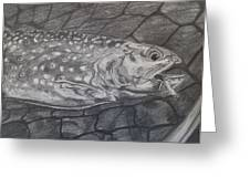 Trout In Net Greeting Card by Michelle Grove