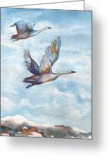 Trumpeter Swans Greeting Card by Peggy Wilson