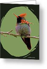 Tufted Coquette Hummingbird Greeting Card by Larry Linton