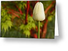 Tulip And Coral Maple In Spring Greeting Card by Mick Anderson