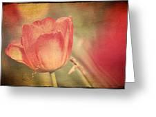 Tulip Tendrils Greeting Card by Toni Hopper