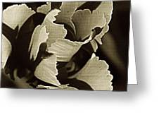 Tulip Whirled Greeting Card by Chris Berry