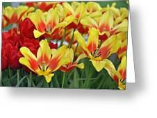 Tulips Glorious Tulip Monsella Greeting Card by Debra  Miller