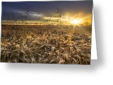 Tumble Wheat Greeting Card by Debra and Dave Vanderlaan