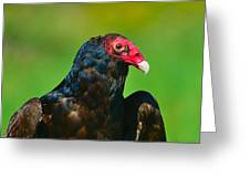 Turkey Vulture Greeting Card by Tony Beck