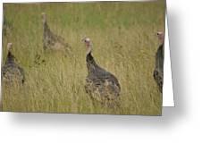 Turkeys Greeting Card by Michael Peychich