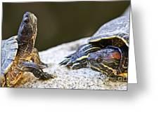 Turtle Conversation Greeting Card by Elena Elisseeva