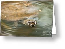 Turtle Greeting Card by Johan Larson