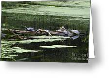 Turtles On Log Scarboro Pond#1  Greeting Card by Gordon Gaul