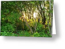 Twilight In The Woods Greeting Card by Anna Villarreal Garbis