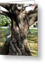 Twisted Tree Greeting Card by Janice Paige Chow