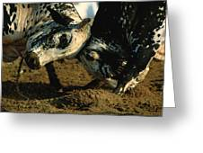 Two  Bulls Locking Heads In The Omani Greeting Card by James L. Stanfield