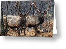 Two Bulls Greeting Card by Wade Aiken