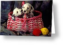 Two Dalmatian Puppies Greeting Card by Garry Gay