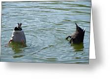 Two ducks diving Greeting Card by Matthias Hauser