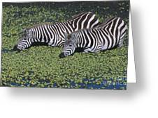 Two For Lunch Greeting Card by Sandra Bronstein