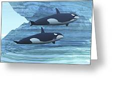 Two Killer Whales Swim Around Submerged Greeting Card by Corey Ford
