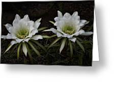 Two Of A Kind  Greeting Card by Saija  Lehtonen