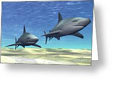 Two Sharks On Patrol Over A Sandy Reef Greeting Card by Corey Ford