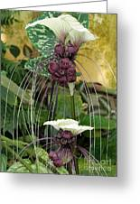 Two White Bat Flowers Greeting Card by Sabrina L Ryan