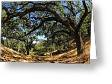 Under The Oak Canopy Greeting Card by Donna Blackhall