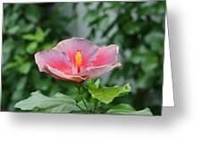 Unusual Flower Greeting Card by Jennifer Ancker