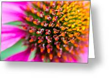 Up Close with A Cone Flower Greeting Card by Susan Stone
