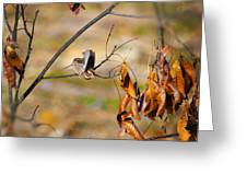 Up Up And Away - Sparrow Greeting Card by J Larry Walker