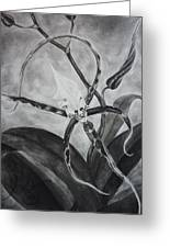Upside-down Orchid Greeting Card by Estephy Sabin Figueroa