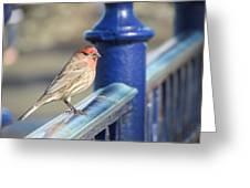 Urban Sparrow Greeting Card by Bonnie Muir