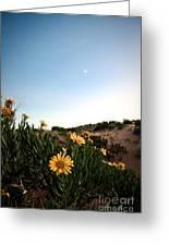 Utah Coral Sand Dune Flowers Greeting Card by Ryan Kelly